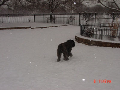 Barry playing with a ball in the snow, Jan 2010
