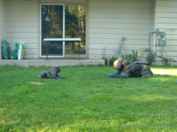 Lola and Hermes at play August 2007