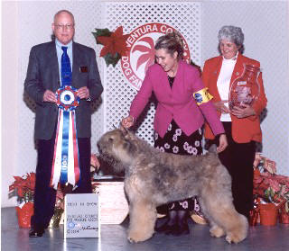 Tangee - Best In Show - Ventura, CA Jan 2004
